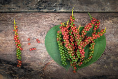 Fresh green and red peppercorns with leaf Stock Photography