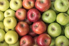 Fresh Green, red and yellow apples, Serbia stock photos