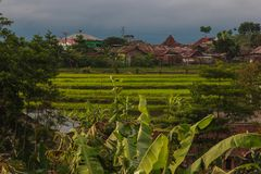 Fresh green rice fields. Terrace cultivation in old asian city royalty free stock images