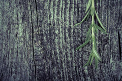 Fresh green ripe bright rosemary banch on old grey wood background Stock Images