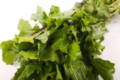 Fresh green pack rocca. Fresh green rocca for vegeterian and people who are on diet stock photos