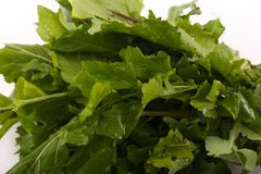 Fresh green pack rocca close up. Fresh green rocca for vegeterian and people who are on diet royalty free stock photo