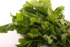 Fresh green pack rocca on white. Fresh green rocca for vegeterian and people who are on diet stock image