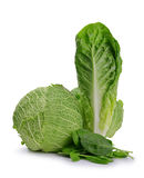 Fresh green Romaine Lettuce, Cabbage and Spinach leaves Stock Photos