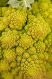 Fresh green romanesco broccoli cabbage macro closeup Royalty Free Stock Photo