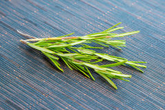Fresh green rosemary bound Royalty Free Stock Image