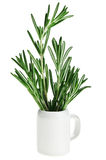 Fresh green rosemary bunch in small ceramic noggin Royalty Free Stock Photography