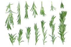 Fresh green rosemary isolated on a white background. Top view. Flat lay royalty free stock images