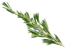 Fresh green rosemary sprig. Fresh green rosemary sprig isolated on a white background. Design element for product label, catalog print, web use royalty free stock photography