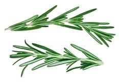 Fresh green rosemary twigs Stock Image