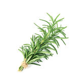 Fresh green Rosemary on a white background Royalty Free Stock Photos
