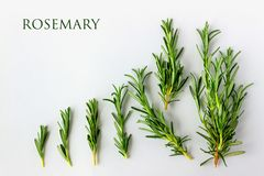 Fresh green rosemary on a white background with copy space for y. Our text. Concept - organic food, vegetarianism, healthy food stock photography