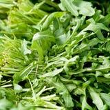 Fresh green rucola salad on market macro Royalty Free Stock Photo
