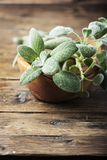 Fresh green sage on the wooden background. Selective focus royalty free stock photos
