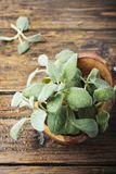 Fresh green sage on the wooden background. Selective focus royalty free stock image