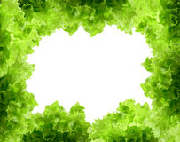 Fresh green salad Stock Photography