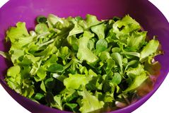 Fresh green salad Stock Images