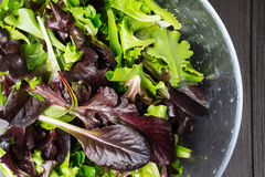 Fresh green salad with arugula, red chard, mangold and lettuce i Stock Photos