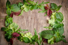 Fresh green salad as the frame Stock Images