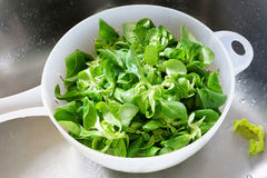 Fresh green salad in bowl Stock Image