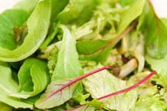 Fresh green salad Royalty Free Stock Photography