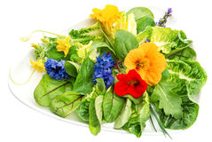 Fresh green salad with edible garden flowers. Healthy food Stock Photos