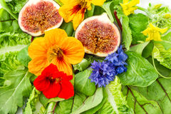 Fresh green salad with flowers and fig fruits. healthy food Stock Images