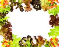 Fresh Green Salad frame Stock Images