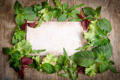 Fresh green salad on the frame Stock Photos