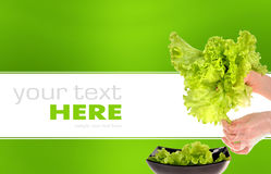 Fresh green salad isolated on background. Fresh green salad isolated on a green and white background Stock Images