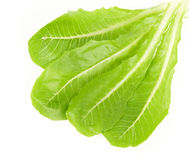 Fresh Green Salad leaves Stock Photos