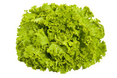 Fresh green salad - lettuce , isolated Royalty Free Stock Images