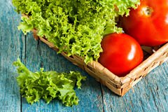 Fresh green salad lola rossa and tomatoes on blue wooden Stock Image