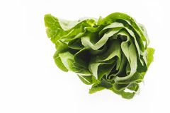 Fresh green salad isolated on a white background. A fresh green salad is lying isolated on a white background. Free space for text royalty free stock photo