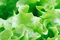 Fresh green salad macro. Close up Stock Images