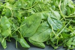 Fresh green salad Stock Images