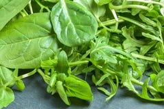 Fresh green salad. Mix of variety, healthy  and fresh green salad Stock Image