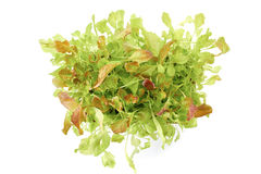 Fresh green salad plants in pot Stock Photo