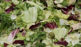 Fresh Green Salad. Royalty Free Stock Images