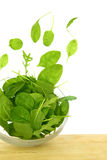 Fresh green salad. With some leaves flying out of a bowl isolated stock photos