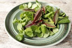Fresh green salad and sorrel. With bright veins in a bowl stock photos