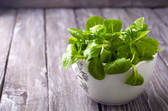 Fresh green salad with spinach Royalty Free Stock Photo