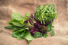 Fresh green salad, spinach and arugula Stock Image