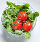 Fresh green salad and tomatoes Stock Photography