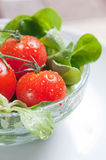 Fresh green salad and tomatoes Stock Photo
