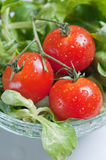 Fresh green salad and tomatoes Royalty Free Stock Photos