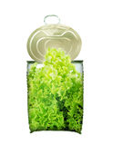 Fresh green saland in can cross-section Royalty Free Stock Photos