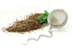 Fresh green salvia and herbal tea Stock Image
