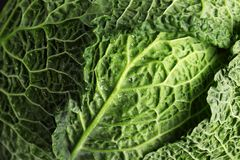 Fresh green savoy cabbage as background. Closeup stock images