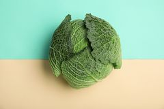 Fresh green savoy cabbage on color background. Top view stock image